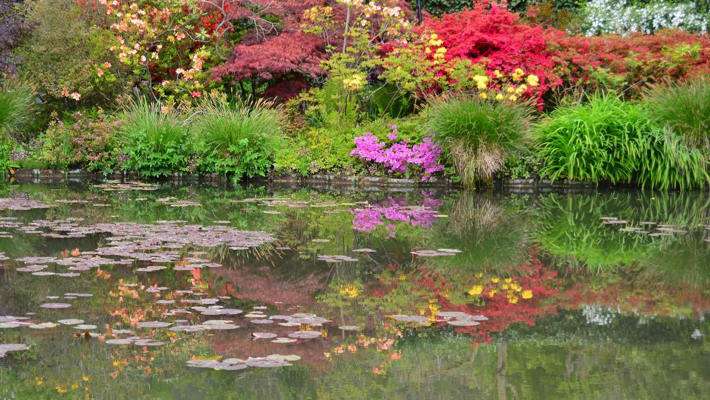 Jeux de lumières sur le plan d'eau de Monet