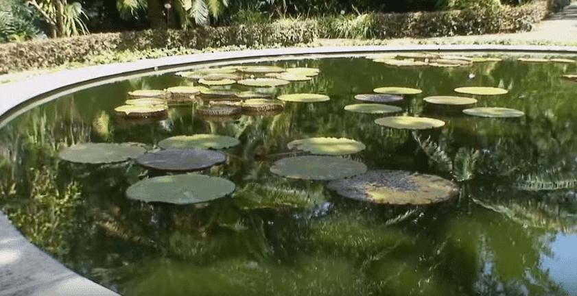 Estanque de nenúfares y otras plantas acuáticas