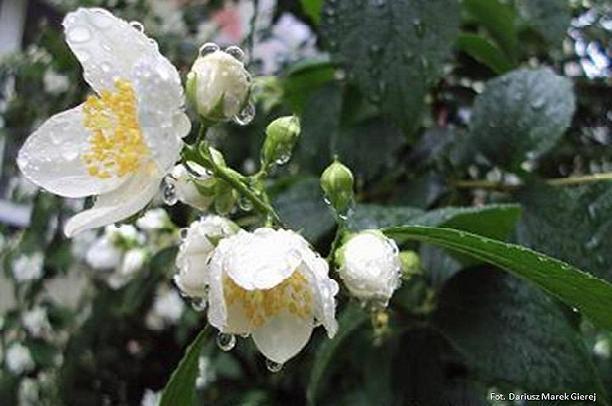 Wiosenny deszcz - wiersz Jolanty Marii Dzienis, fot Dariusz Marek Gierej