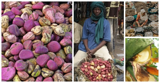 Kola nut customs, benefits, uses and side effects