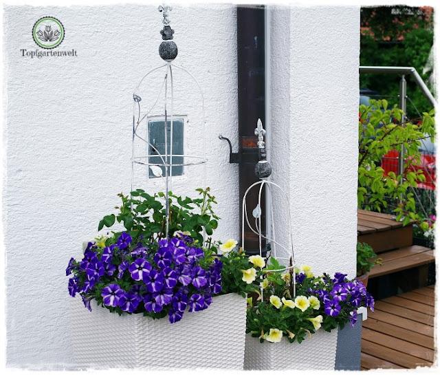 Gartenblog Topfgartenwelt Buchvorstellung Buchrezension: Der mobile Garten - Konzepte für große Pflanzgefäße - kreativ, mobil, stylish - Gärtnern in Töpfen - große Töpfe als Sichtschutz für eine Regenrinne
