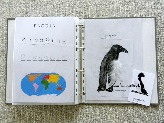 || Activité autour des cartes de nomenclature : Représenter et comparer des animaux (pingouin)