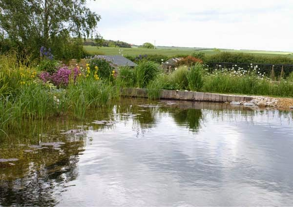 Not only that, but it attracts amazing wildlife to the yard. - See This Pond? It's Hiding A Secret That You're Going To Absolutely Love…. Trust Me.
