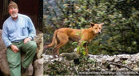 NEW GUINEA HIGHLAND WILD DOG FOUNDATION 2
