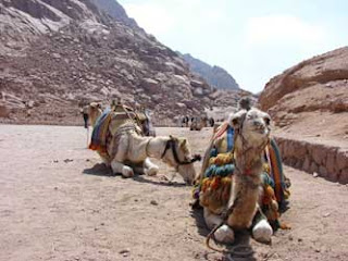 Naik Unta ke Gunung Sinai