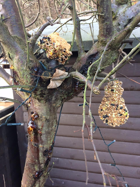 The bird feeders hanging from a tree