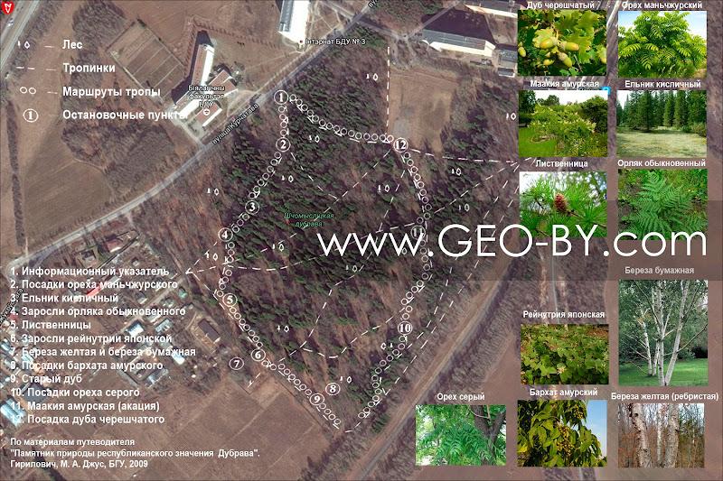 Карта памятника природы республиканского значения 'Дубрава' с расположением растений