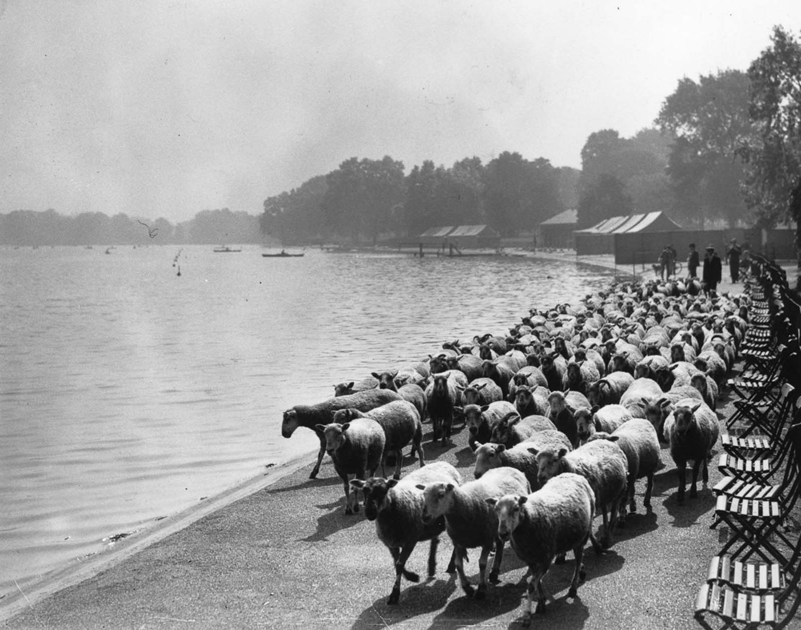 By the Serpentine in Hyde Park. 1936.