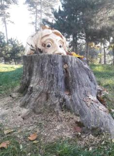 Romanian Artist Carves Tree Stumps into Wonderful Sculptures | Weird news in Nigeria.