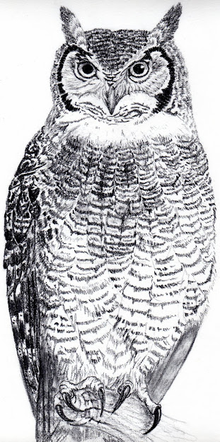 Great Horned Owl Coloring Page Az Coloring Pages