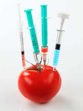 safety of genetically modified organisms Bibliography includes bibliographical references and index publisher's summary genetically modified organisms in food focuses on scientific evaluation of published research relating to gmo food products to assert their safety as well as potential health risks.