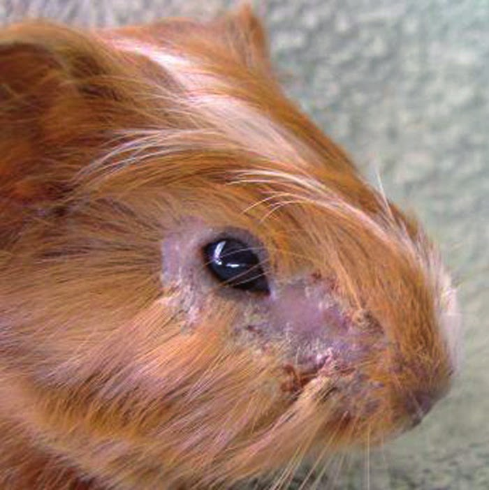 Five Bunnies In Her Hair: April 2015