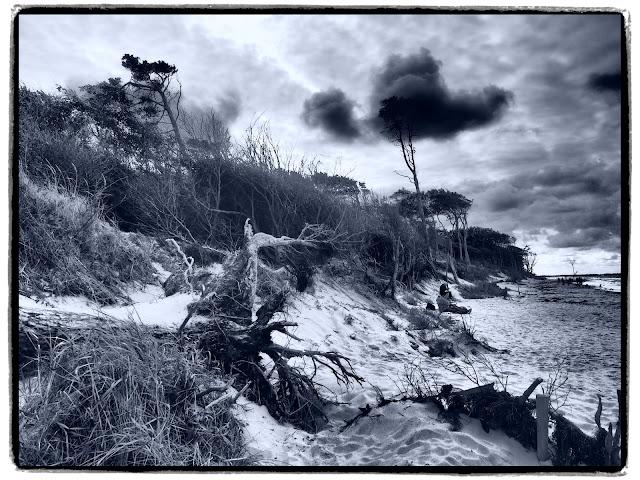 Darß - Kein aufgeräumter Touri-Strand