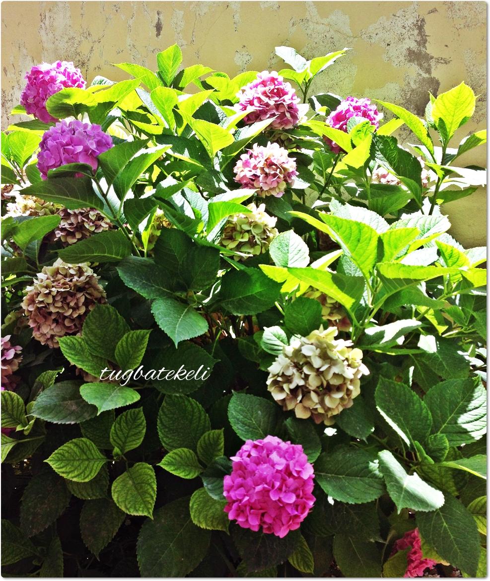 Çiçekler Hayatın İçinde