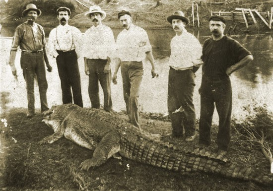 The Logan crocodile, 1905. John Storey, Jack and Alf Hinds, Mr Cook, Mr Rump and Fred Manitzky. (Qld State Library)