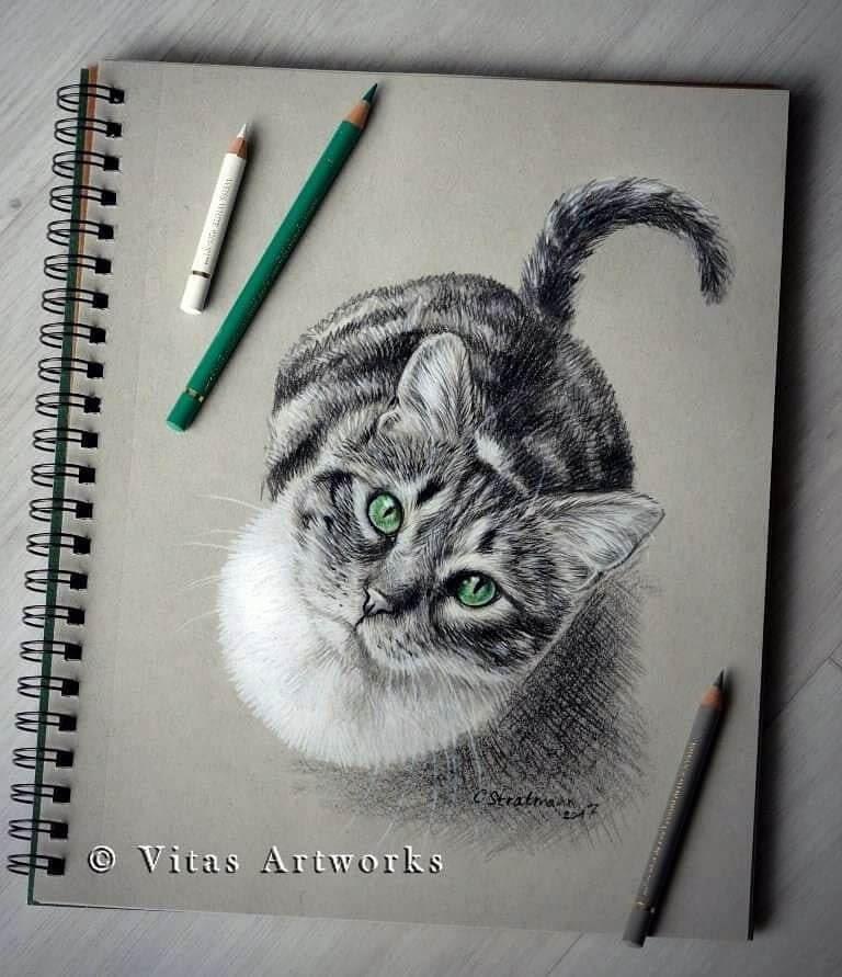11-Cat-waiting-for-dinner-Carolin-Behnke-www-designstack-co
