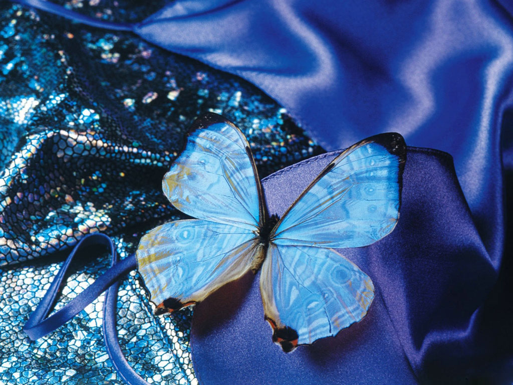 blue butterfly group - photo #25