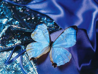 Wallpapers blue butterfly art wallpapers for Immagini farfalle per desktop