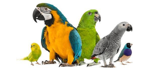 Que son las Aves exóticas y sus tipos