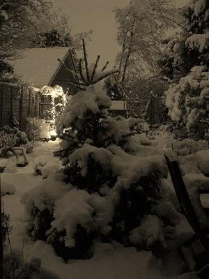 CAN YOU REPLANT A CHRISTMAS TREE?  The Garden of Eaden