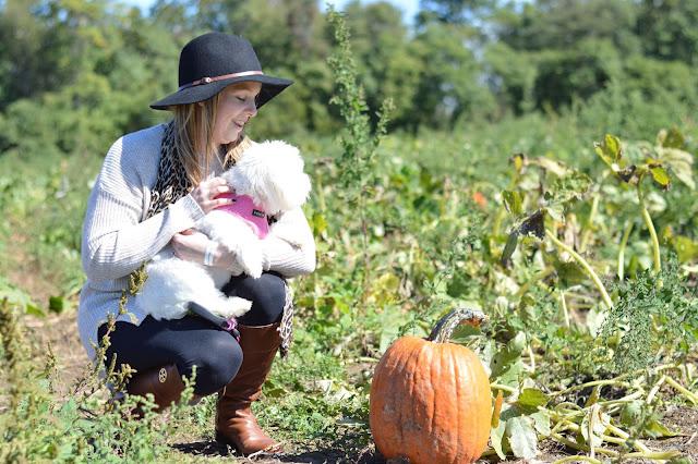 pumpkin-patch-outfit