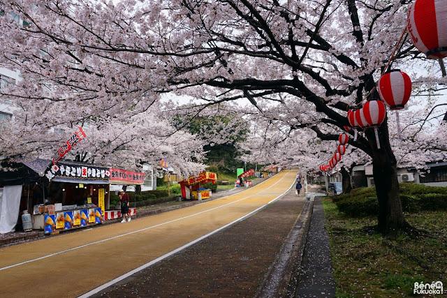 西公園の桜、福岡