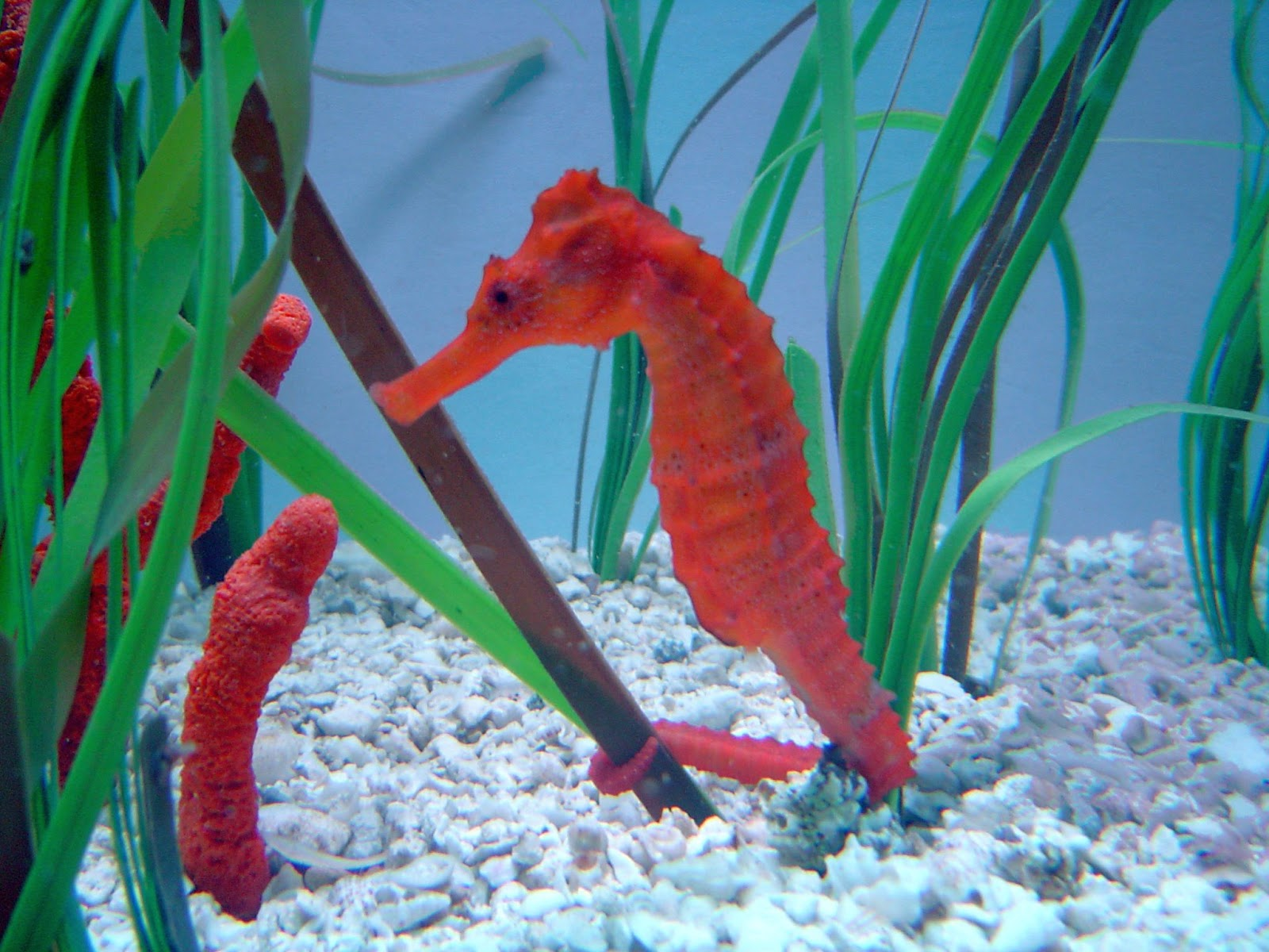 Cute Baby Hd Wallpaper Sea Horse Wallpapers Animals Library