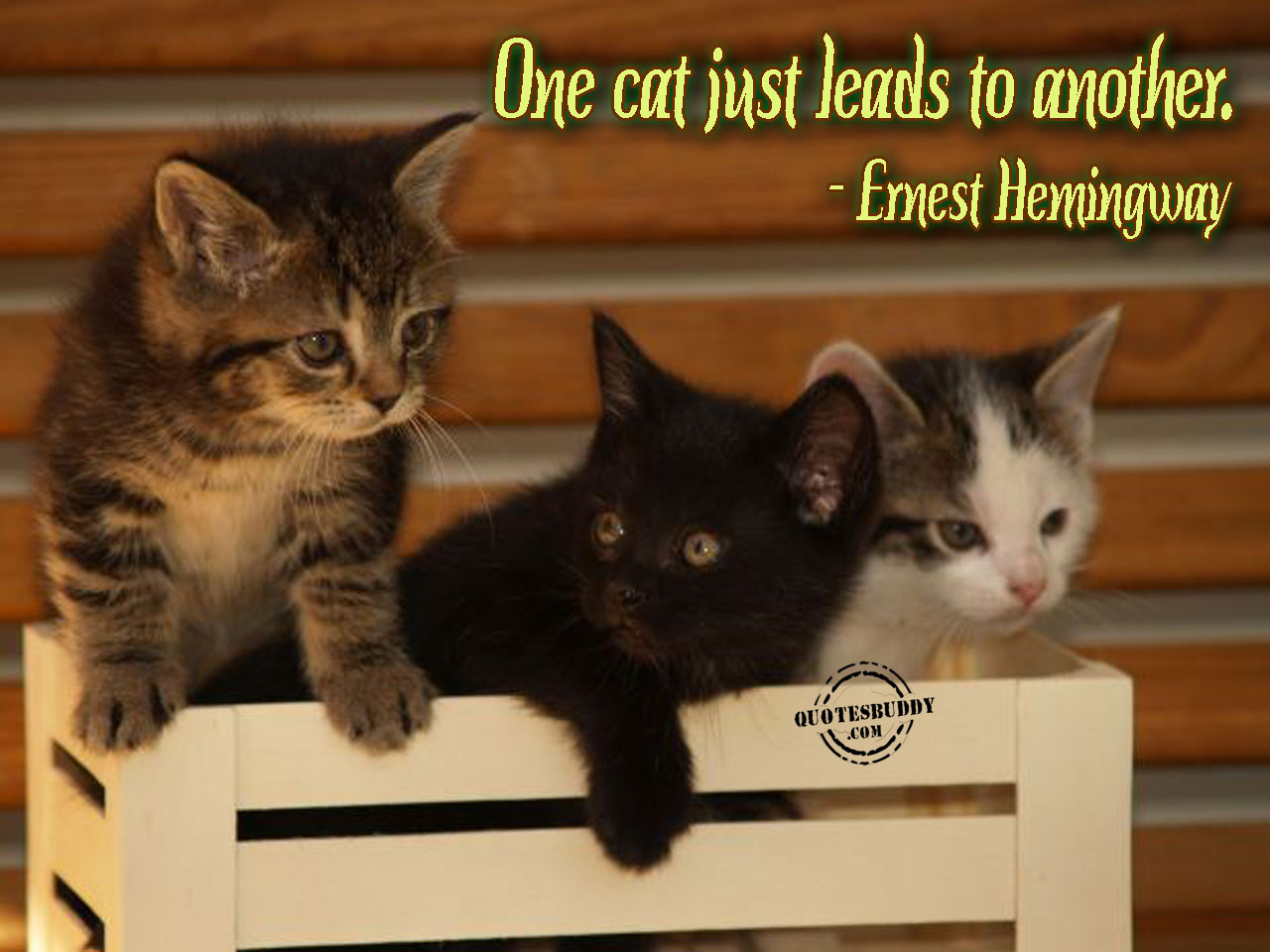Cutie Cats And Funny Kittens (Quotes Aswell):) - YouTube |Cute Kittens Quotes
