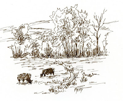 art pen sketch ink cows pasture rural landscape