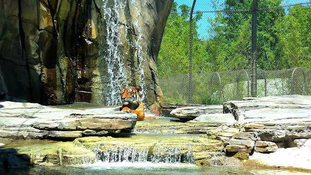 Land of the Tigers, Florida, WW