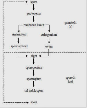 http://www.materisma.com/2014/05/penjelasan-tumbuhan-thallophyta-hepaticae-musci.html