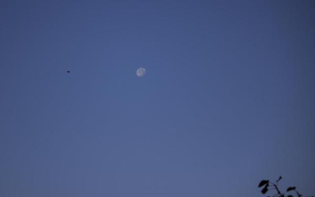 skywatch, moon, bird, morning, mumbai, bandra east, india, branch, blue sky,