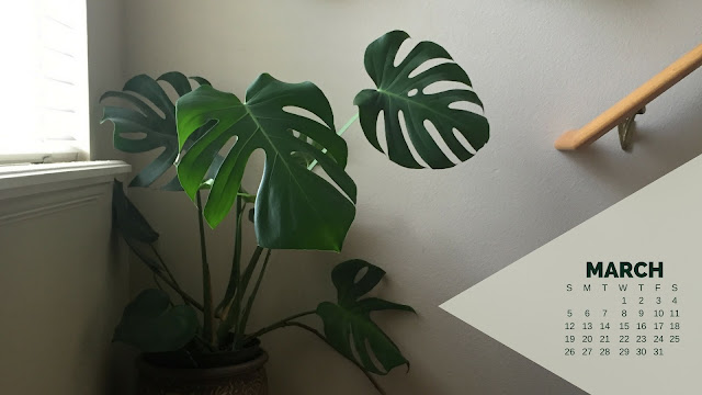 Desktop Wallpaper Calendar March 2017 - Monstera Deliciosa