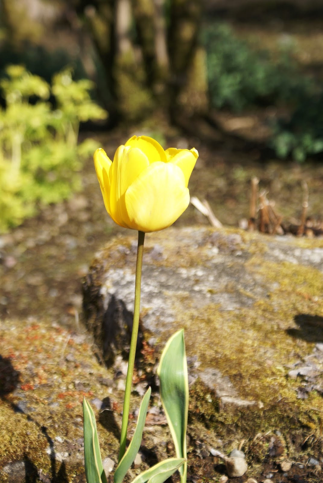 isle of skye scotland united kingdom dunvegan castle tulip
