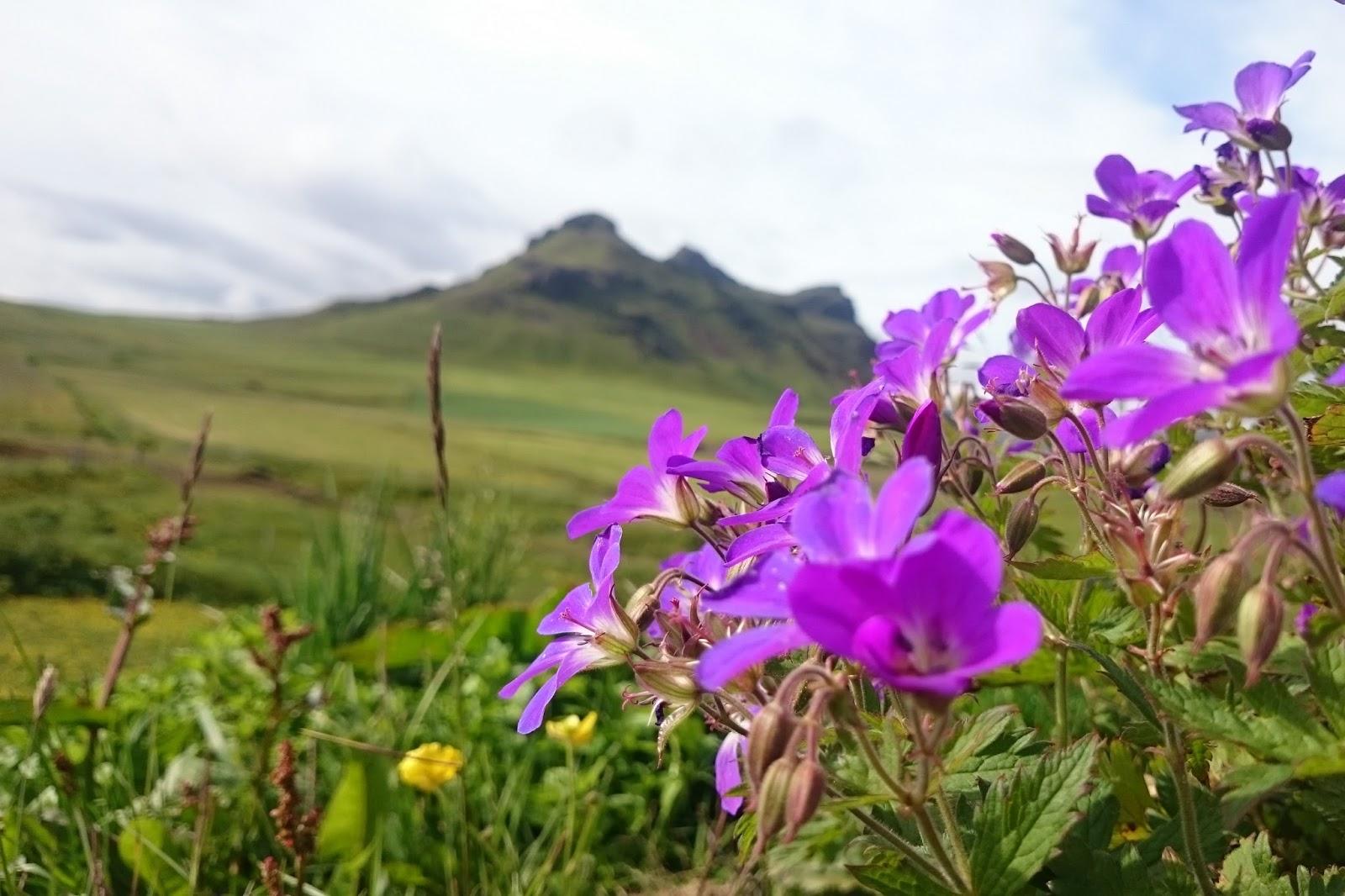 islandzki krajobraz, Islandia, południowa Islandia, islandzka góra
