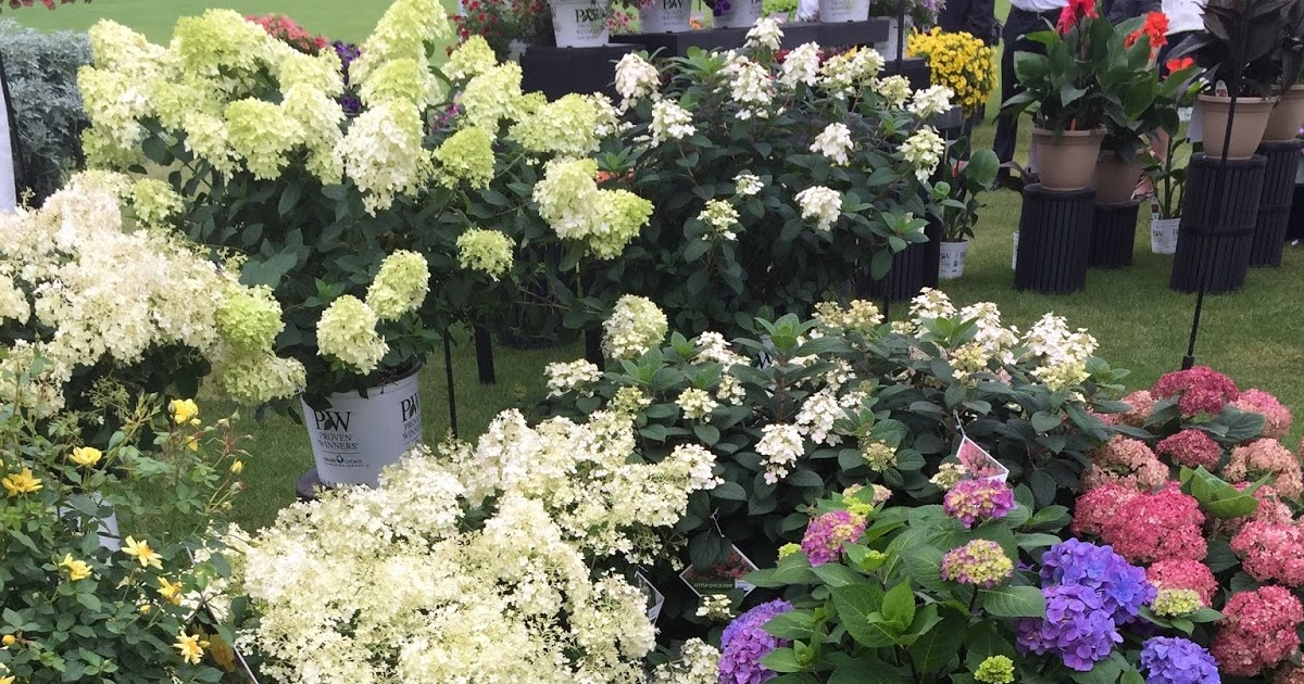 Proven Winners Colorchoice Plant Of The Week California Spring
