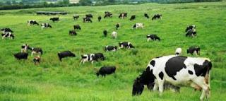 El trabajo, realizado por científicos de la Facultad de Agronomía de la UBA junto a pares alemanes y estadounidenses, 'representa un avance en el combate de una temida enfermedad que afecta a los bovinos y que se puede transmitir a humanos', detalló el sitio 'Sobre la Tierra' de esa facultad.