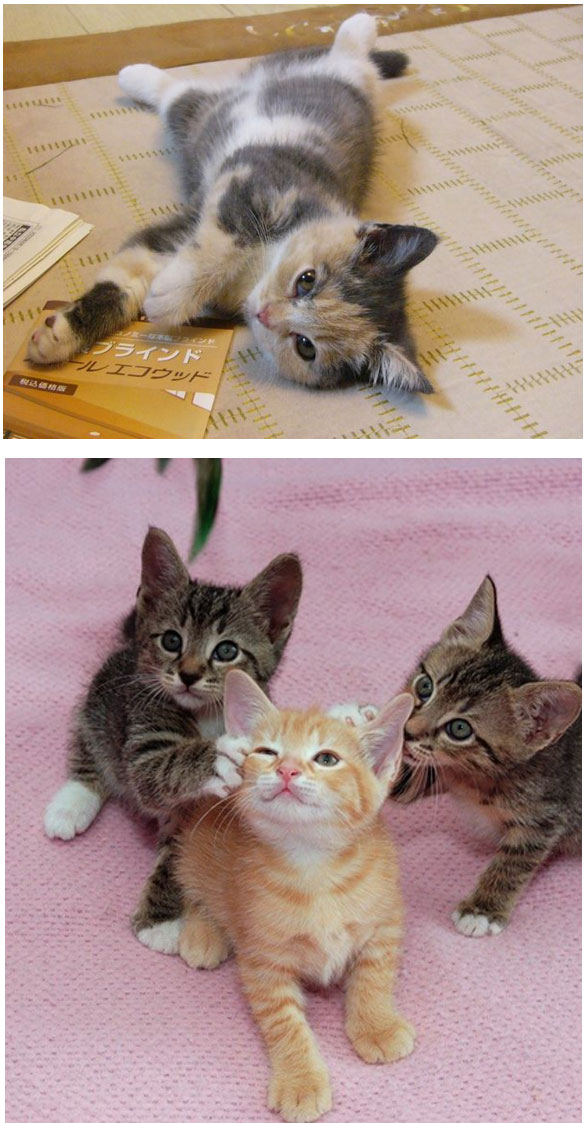 Gambar Kucing Yang Sudah Diwarnai godean.web.id