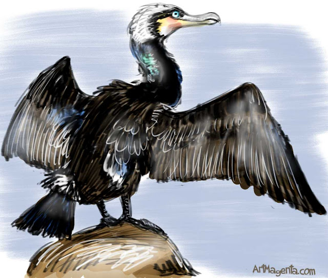 Cormorant sketch painting. Bird art drawing by illustrator Artmagenta