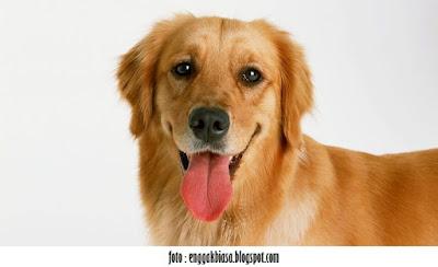 Seekor Anjing - Kumpulan Artikel Pengetahuan Umum