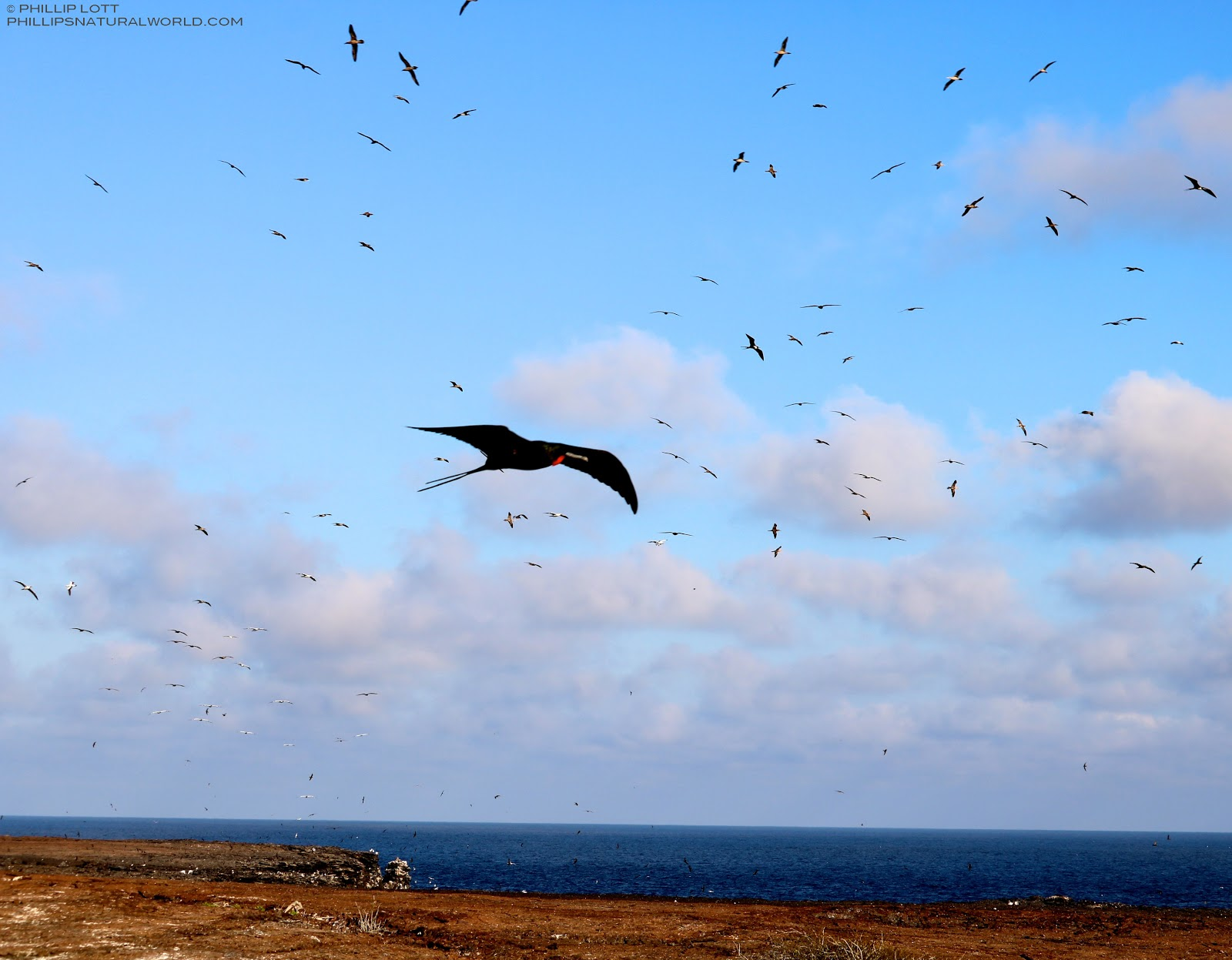 Galapagos Prince Philips Steps And El Barranco