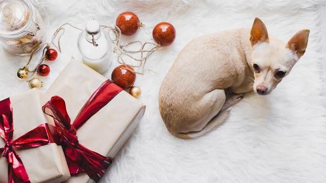 Zwierzę na prezent?