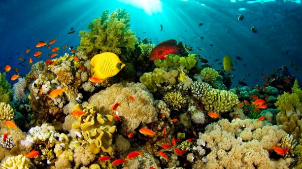 Traveling ke Manado? Yuk, Pilih Suka-Suka Hotel Murahmu