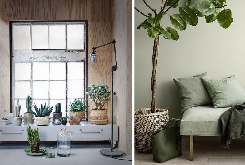 Piante In Casa Idee : Ottobre le piante rientrano in casa di arredamento