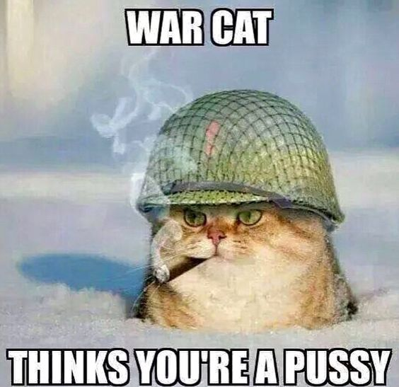 Funny War Cat thinks you're a pussy joke picture