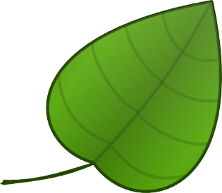 alat peraga gambar metamorfosis kupu kupu untuk anak tk