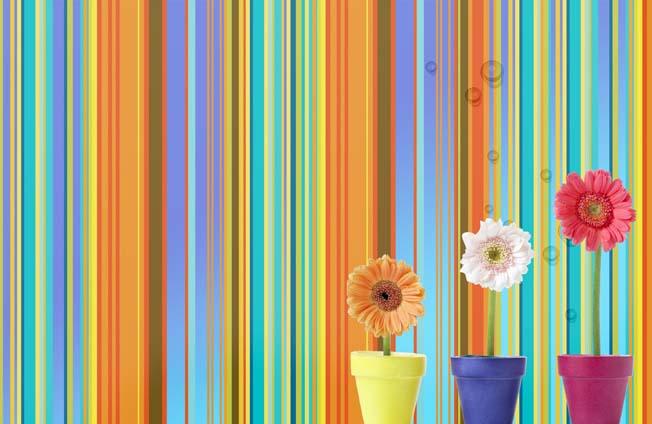 PSD Packgrounds free Download, تحميل خلفيه خطوط ألوان الطيف مفتوحه للفوتوشوب PSD, PSD Spectrum Colors Packground Temlate,