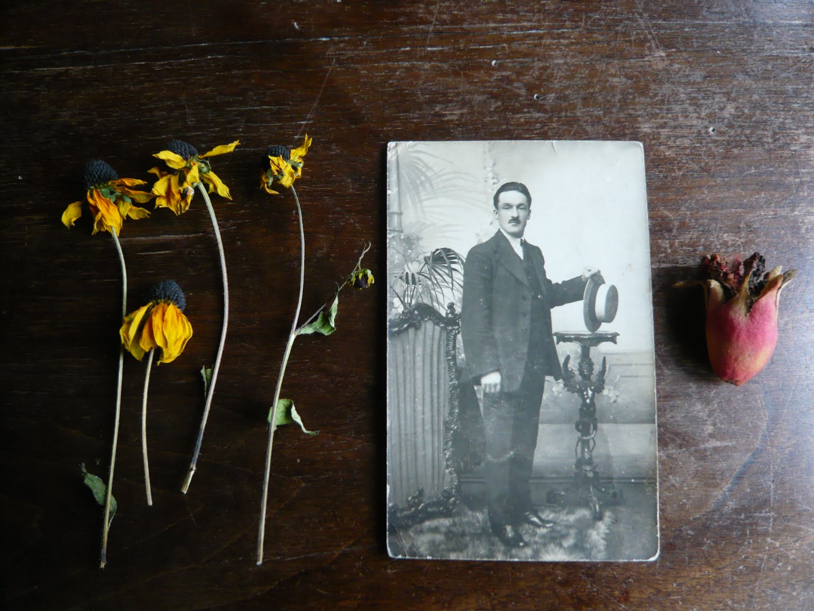 Fiori Di Ortensia Secchi come essiccare e usare i fiori secchi | blossom zine blog