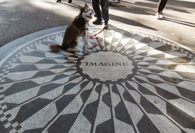 The famous Imagine mozaic dedicated to the memory of John Lennon, is located in Strawberry Fields in New York City's Central Park