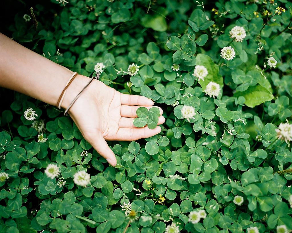 hand holding a lucky four leaf clover